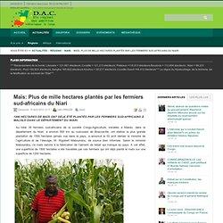 Maïs: Plus de mille hectares plantés par les fermiers sud-africains du Niari