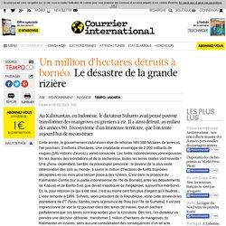 UN MILLION D'HECTARES DÉTRUITS À BORNÉO. Le désastre de la grande rizière