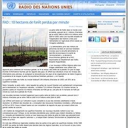 FAO : 10 hectares de forêt perdus par minute