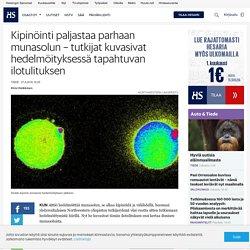 Kipinöinti paljastaa parhaan munasolun – tutkijat kuvasivat hedelmöityksessä ...
