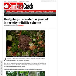Hedgehogs recorded as part of inner city wildlife scheme