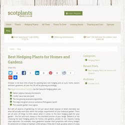 Best Hedging Plants for Homes and Gardens