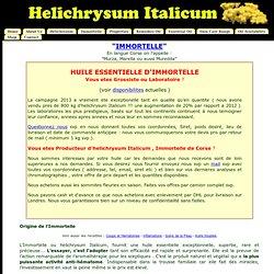 Helichrysum Italicum ou Immortelle de Corse