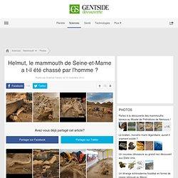 Helmut, le mammouth de Seine-et-Marne a t-il été chassé par l'homme ?
