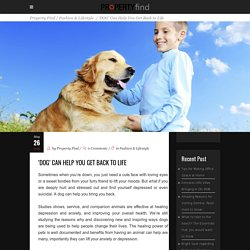 'Dog' can help you get back to life - Property Find