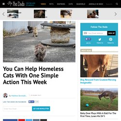 You Can Help Homeless Cats With One Simple Action This Week