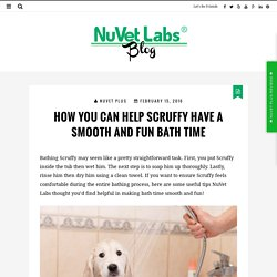 How You Can Help Scruffy Have a Smooth and Fun Bath Time