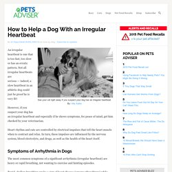 How to Help a Dog With an Irregular Heartbeat