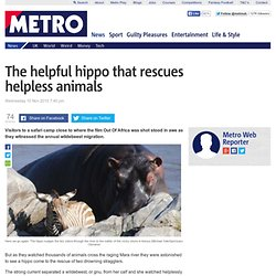 The helpful hippo who rescues other animals from Mara river
