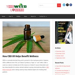 How CBD Oil Helps Benefit Wellness - The Weed Lovers