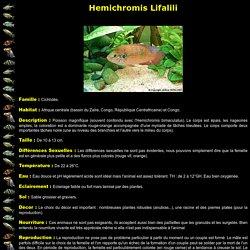Hemichromis Lifalili