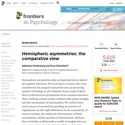 Hemispheric Asymmetries: The Comparative View