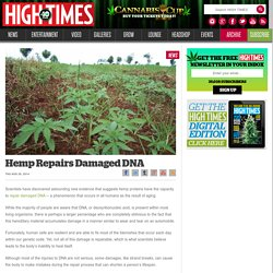 Hemp Repairs Damaged DNA