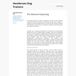 The Siberian Husky Dog