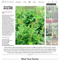 Good King Henry, Non-GMO, Organic
