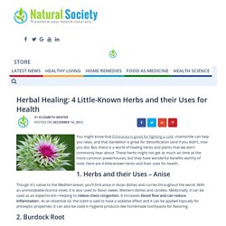 Herbal Healing: 4 Little-Known Herbs and their Uses for Health