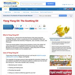 Herbal Oil: Ylang Ylang Oil Benefits and Uses