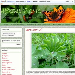 HERBAL PICNIC: LADY'S MANTLE
