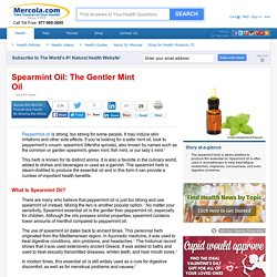 Herbal Oil: Spearmint Oil Benefits and Uses