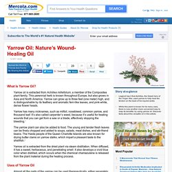 Herbal Oil: Yarrow Oil Benefits and Uses