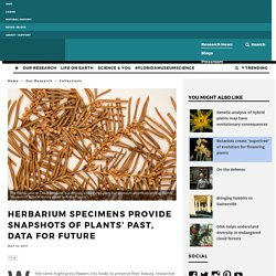Herbarium specimens provide snapshots of plants' past, data for future – #FloridaMuseumScience