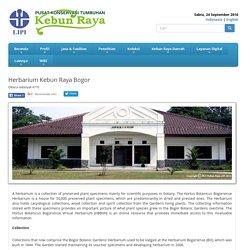 Indonesia: Herbarium Kebun Raya Bogor