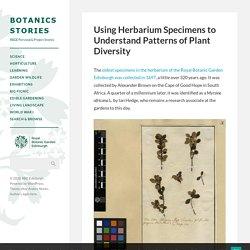 Using Herbarium Specimens to Understand Patterns of Plant Diversity