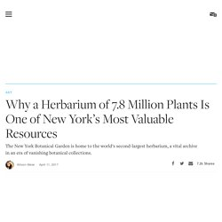 Why a Herbarium of 7.8 Million Plants Is One of New York's Most Valuable Resources