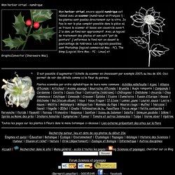 Mon herbier virtuel - Les plantes scannées
