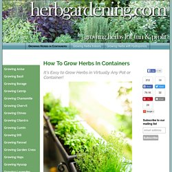 How To Grow Herbs in Pots & Containers