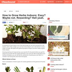 How to Grow Herbs Indoors: Easy? Maybe not. Rewarding? Hell yeah. - Chowhound