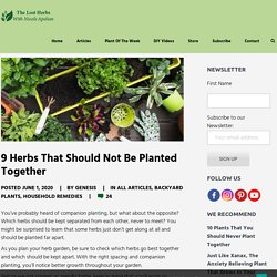 9 Herbs That Should Not Be Planted Together - The Lost Herbs