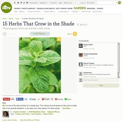 Herbs That Grow in the Shade