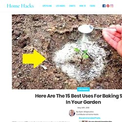Here Are The 15 Best Uses For Baking Soda In Your Garden