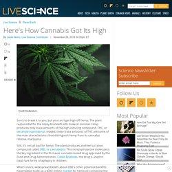 Here's How Cannabis Got Its High