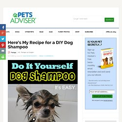 DIY Dog Shampoo, DIY Flea Treatment, DIY Skunk Odor Remover