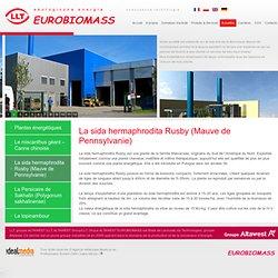 La sida hermaphrodita Rusby (Mauve de Pennsylvanie) - Centrales thermiques – chaufferies – a paille – a biomasse – a bois – incineration des boues