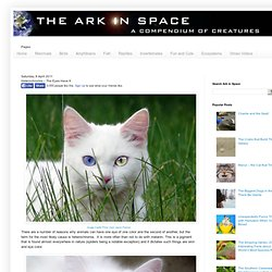 The Ark In Space: Heterochromia – The Eyes Have It