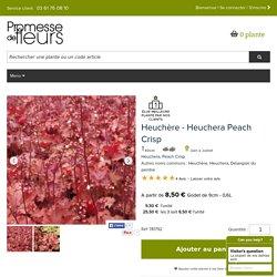 Heuchera Peach Crisp - Heuchère - Variété au feuillage persistant, orange pêche.