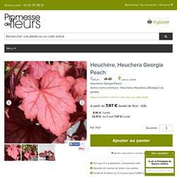 Heuchera Georgia Peach, un feuillage orange rose tacheté d'argent.