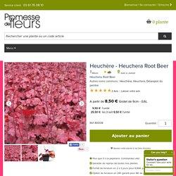 Heuchera Root Beer - Heuchère - Vivace persistante aux feuillage rouge orangé virant à l'orange pourpré