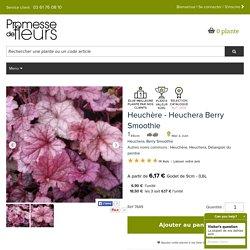 Heuchera Berry Smoothie - Heuchère - Feuillage rose, idéal en couvre-sol