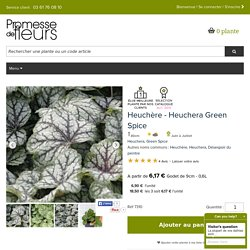 Heuchère - Heuchera Green Spice