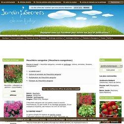 Heuchère sanguine (Heuchera sanguinea) : culture, entretien, semis