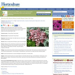 Heucherella Honey Rose Lends Warm Color All Year - HorticultureHorticulture