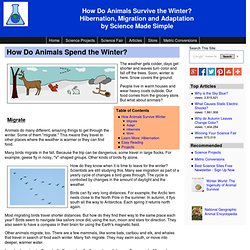 Animals in winter - Hibernation, Migration and Adaptation