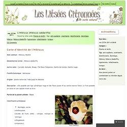L'Hibiscus (Hibiscus sabdariffa) « Les Litsées Citronnées