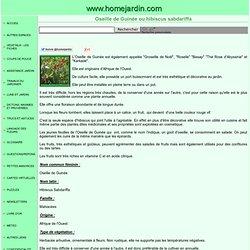 Oseille de Guinée ou hibiscus sabdariffa, fiche technique complète