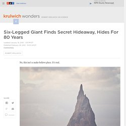 Six-Legged Giant Finds Secret Hideaway, Hides For 80 Years : Krulwich Wonders...