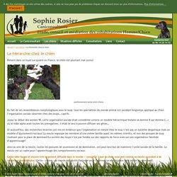 Sophie Rosier, Caniconsultante